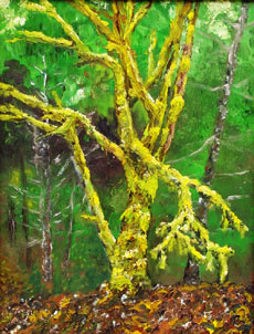 Howard Bruner painting - Wolf Tree